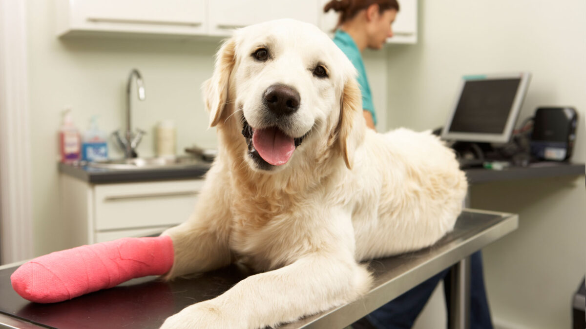 Health Insurance For Dogs - Questions Every Dog Owner Should Ask