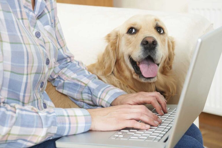 Pet Well being Care Insurance coverage