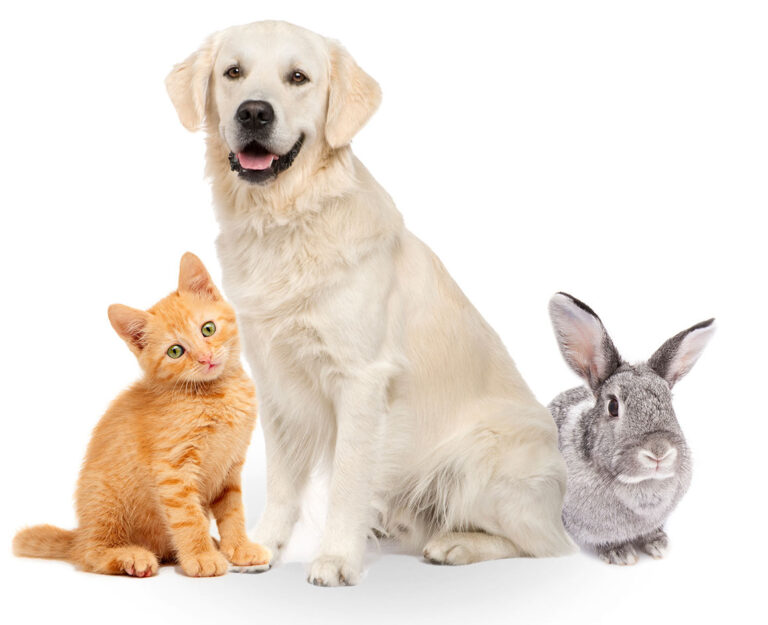 Veterinary Insurance coverage – Luxurious Or Necessity?