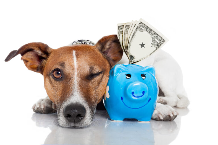 What's Pet Insurance coverage – How Pet Insurance coverage Can Save You 1000's of {Dollars}