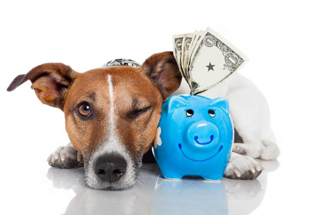 What is Pet Insurance - How Pet Insurance Can Save You Thousands of Dollars