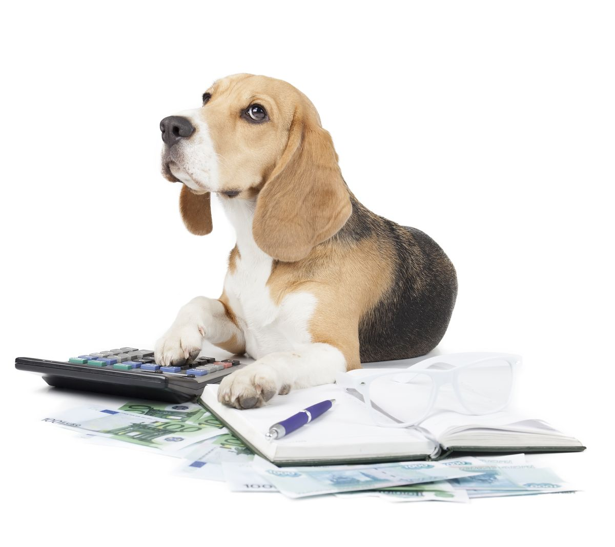 Pet Insurance - Helping Our Pets Through an Economic Crisis